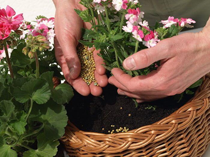 Как поливать мочевиной комнатные цветы