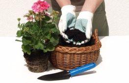 Способы пересадки комнатных растений в новые горшки