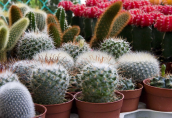 Удобрение для кактусов: как и чем подкормить суккуленты и не навредить