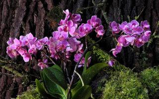 Где растут орхидеи в природе: чем отличаются гибриды от природных разновидностей