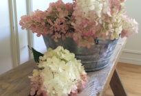 Любимица садоводов – гортензия «Литл Блоссом»