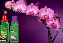«Бона форте» – спасатель для комнатных орхидей