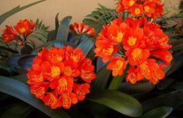 Комнатные растения, не требующие много света, прекрасно растут на теневой стороне