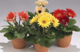 Выращиваем комнатные цветы из семян: главные секреты успеха