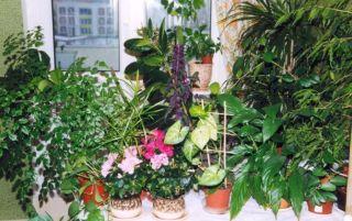 Как выбрать комнатные цветы: разнообразие форм и видов