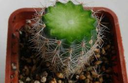 Как размножить кактус: полезные советы и рекомендации от опытных цветоводов