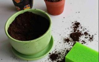 Как правильно пересадить кактус в другой горшок: пошаговая инструкция и другие советы цветоводу