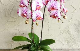 Все о выращивании орхидей в домашних условиях