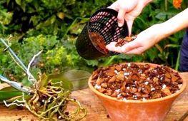 Создание грунта для хорошего роста орхидей
