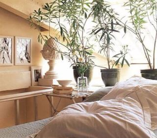 Спальня: подходящее ли это место для комнатных цветов?