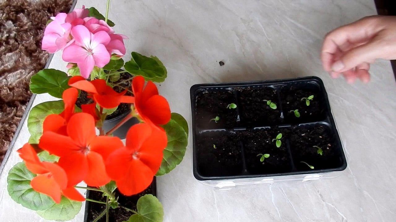 отделите цветы из семян в домашних условиях фото выносливость