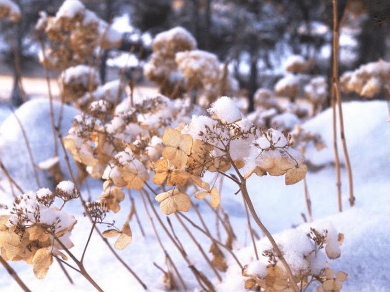 зимовка без укрытия