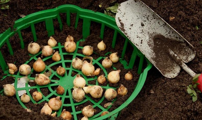 емкость для защиты луковиц от грузунов