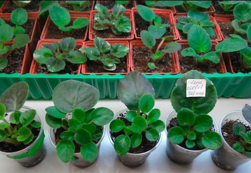 растения пора рассаживать