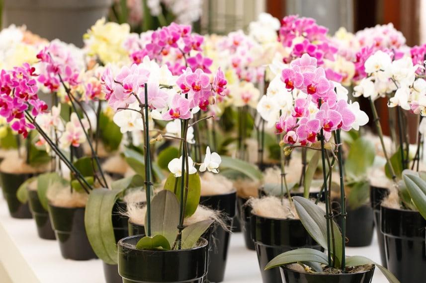 растения в продаже