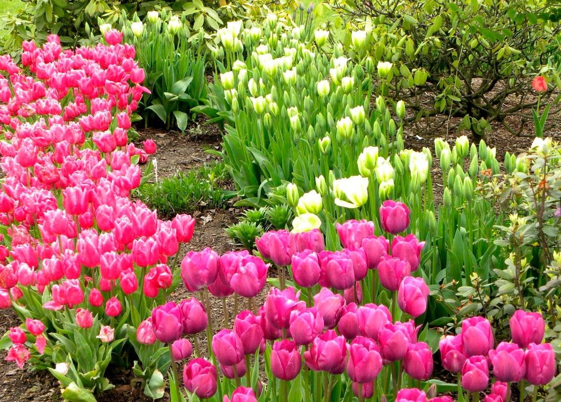 красивое цветение