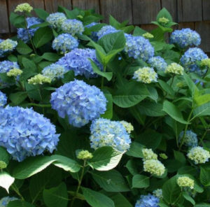 цветы на кустарнике