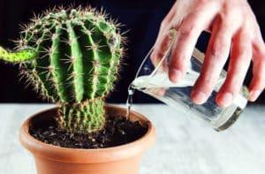 особенности полива растения