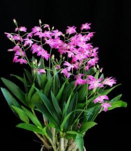 крупное растение