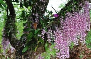 каскадное цветение