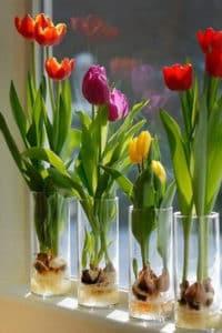 проращивания и цветение на гидропонике