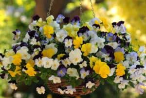 насыщенное цветение