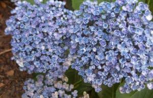 привлекательное цветение